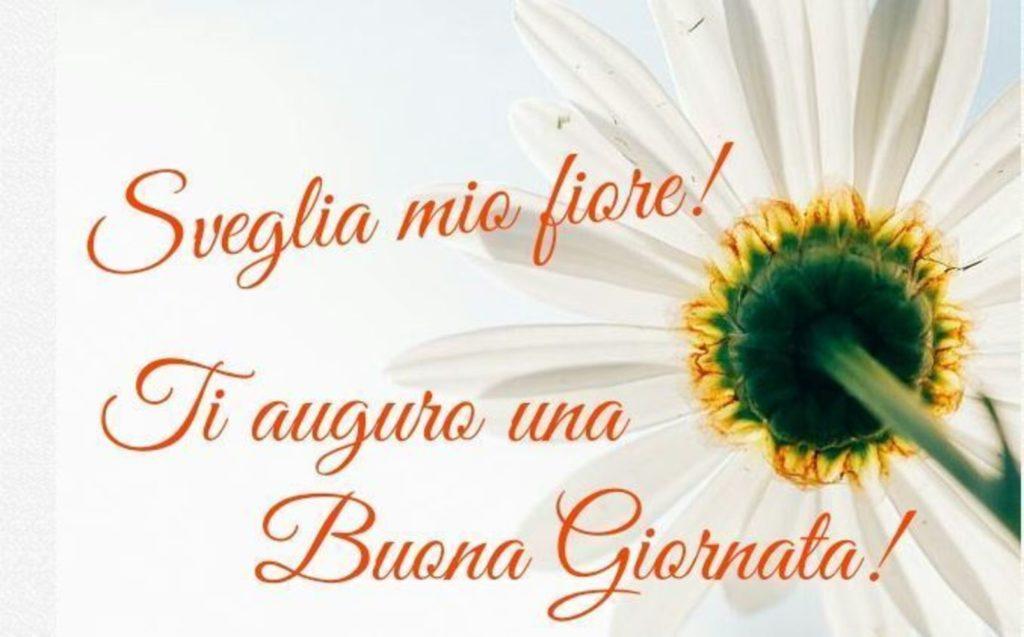 Foto-Buongiorno-Whatsapp-Immagini_037-1024x637