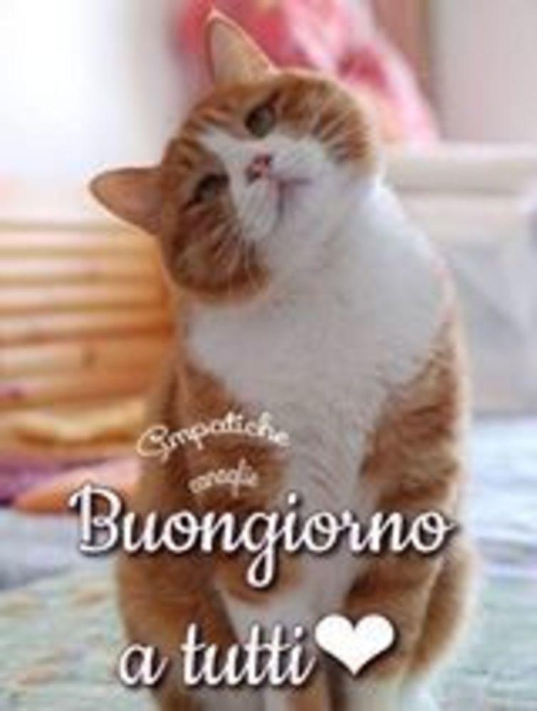 Foto-Buongiorno-Whatsapp-Immagini_055