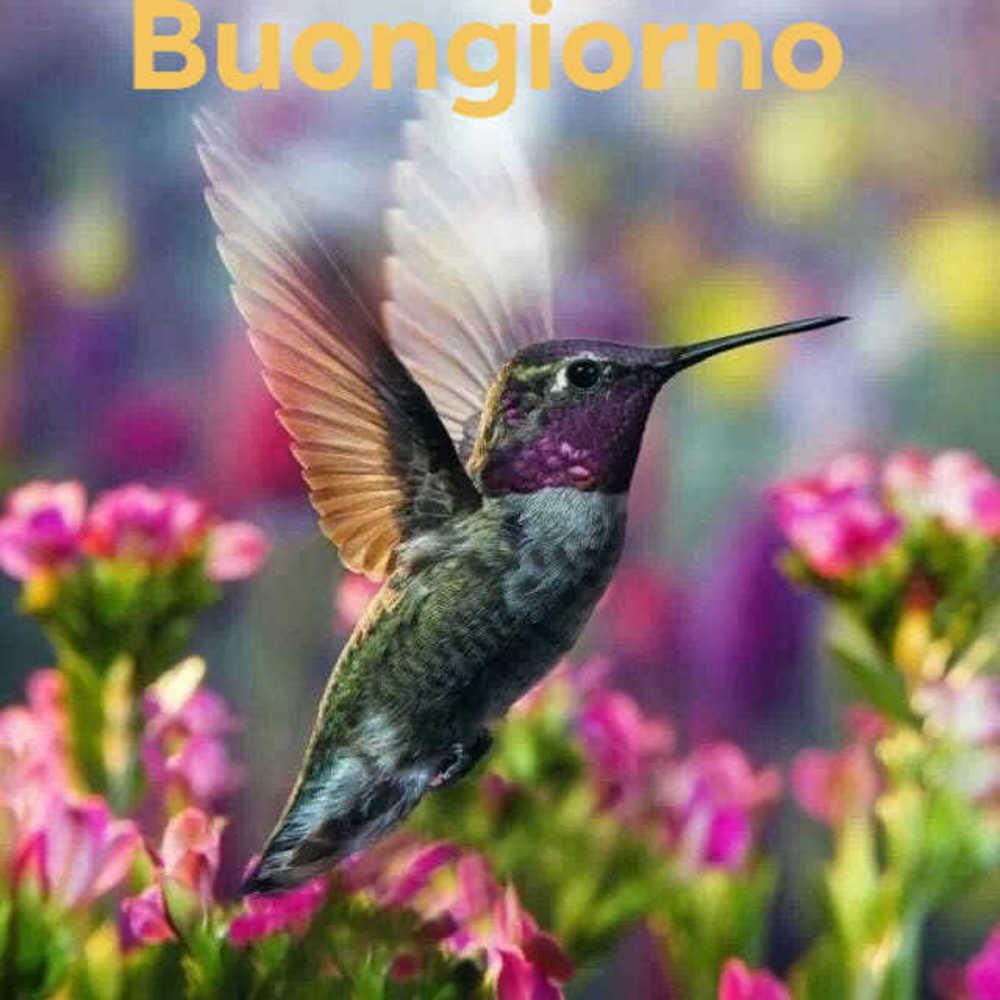 Foto-Buongiorno-Whatsapp-Immagini_082
