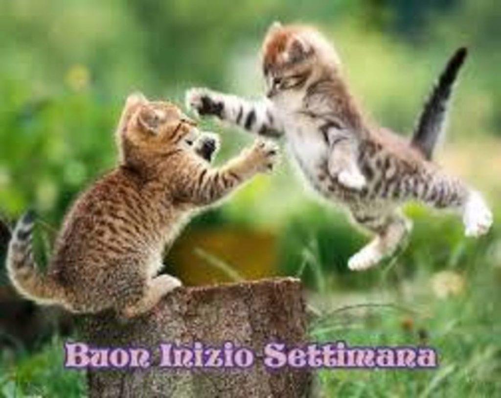 Foto-Buongiorno-Whatsapp-Immagini_105-1024x813