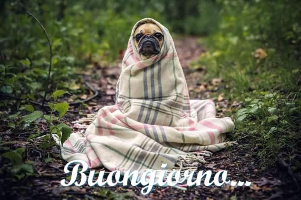 Immagini-Buongiorno-Buona-Giornata_048-1024x683