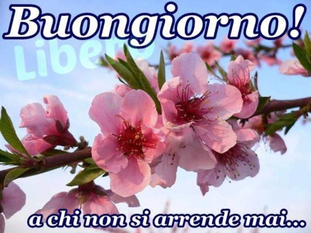 Immagini-Buongiorno-Buona-Giornata_059-1024x769