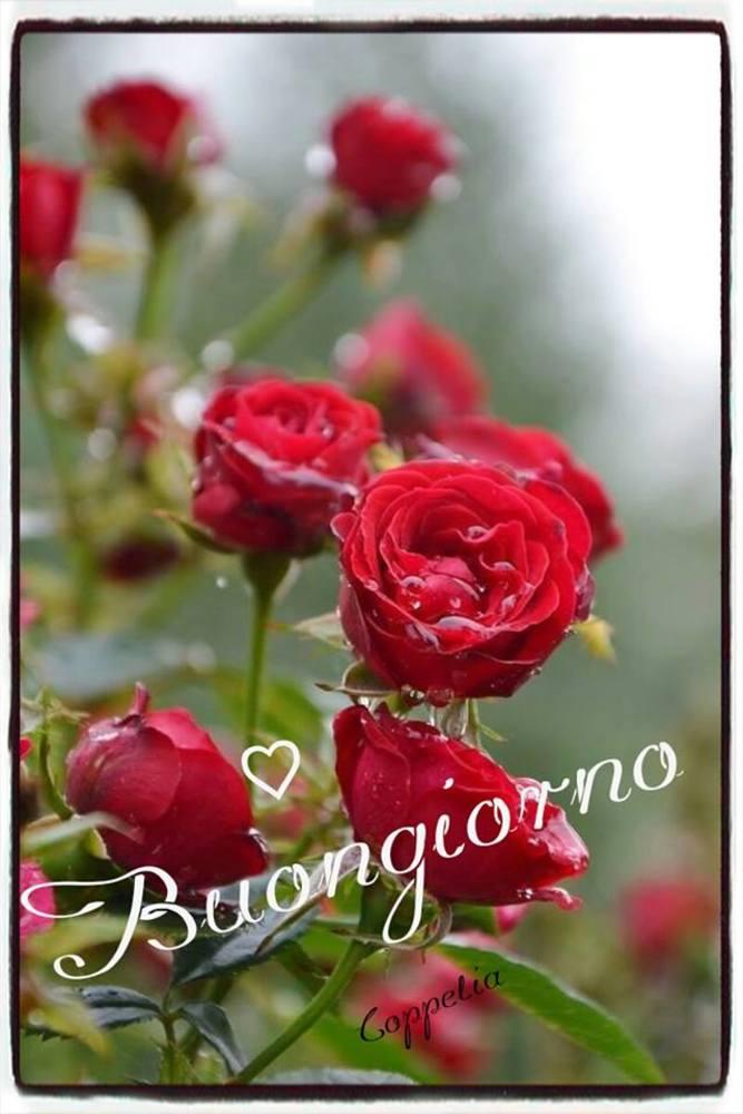 Immagini-Buongiorno-Buona-Giornata_066
