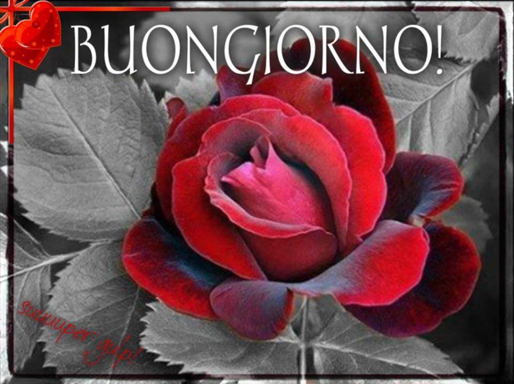 Immagini-Buongiorno-Nuove_0023-1024x765