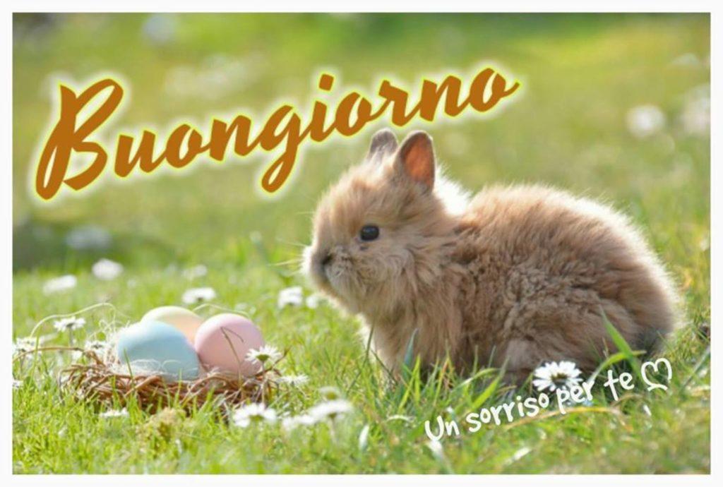 Immagini-Buongiorno-Nuove_0046-1024x690