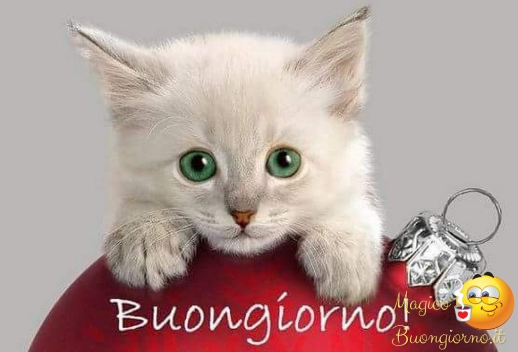 Immagini-Buongiorno_0020-1024x696