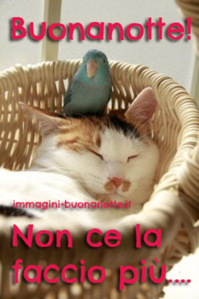 buonanotte-immagini_189-684x1024