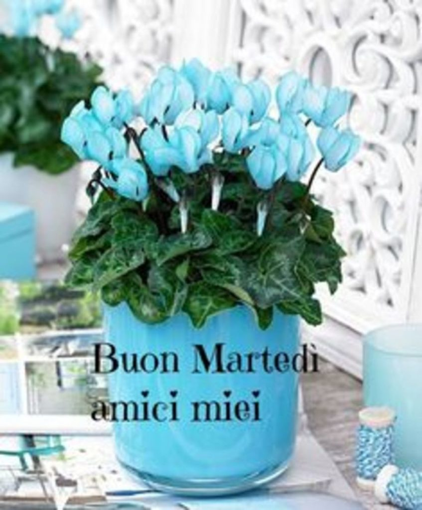 martedì-immagini-belle-nuove_038-847x1024
