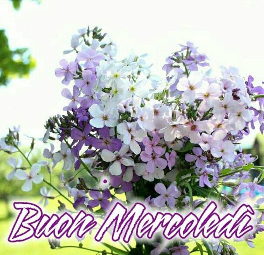 mercoledì-immagini-belle-nuove_144